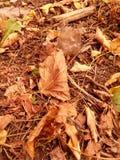 Bunter Hintergrund der trockenen Herbstblätter Lizenzfreie Stockfotografie