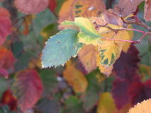 Bunter Hintergrund der trockenen Herbstblätter Lizenzfreies Stockbild