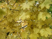 Bunter Hintergrund der trockenen Herbstblätter Lizenzfreie Stockfotos