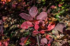 Bunter Hintergrund der trockenen Herbstblätter Stockfoto