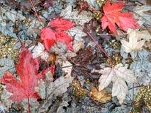 Bunter Hintergrund der trockenen Herbstblätter Lizenzfreie Stockbilder