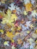 Bunter Hintergrund der trockenen Herbstblätter Stockfotografie