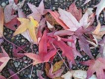 Bunter Hintergrund der trockenen Herbstblätter Stockfotos