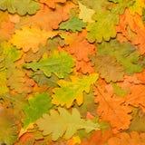 Bunter Hintergrund des gefallenen Herbstlaubs Stockbilder