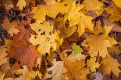 Bunter Hintergrund des gefallenen Herbstlaubs stockfoto