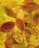 Bunter Hintergrund des roten Herbstlaubs. Lizenzfreies Stockfoto