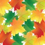 Bunter Hintergrund mit Ahornblättern Stockbild