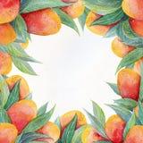 Bunter Hintergrund mit Aquarell trägt Mangorahmen Früchte Aquarellmangofrucht und Blattnahaufnahme lokalisiert auf weißem Hinterg Stockbilder
