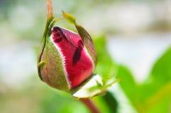 Bunter Hintergrund Rosen-Blumenblumenstrauß-Weinlesehintergrund Vektorabbildungskala zu irgendeiner Größe lizenzfreie stockfotos