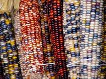Bunter indischer Mais, der an der hölzernen Wand hängt. stockfotos