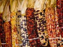 Bunter indischer Mais, der an der hölzernen Wand hängt. lizenzfreies stockbild