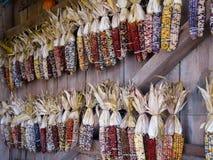 Bunter indischer Mais, der an der hölzernen Wand hängt. Stockfoto
