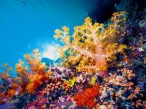 Bunter korallenroter blauer Hintergrund Stockfotos