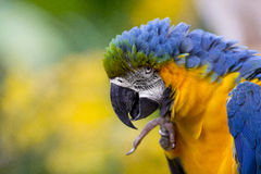 Bunter Macaw-Papagei Stockfotos