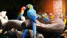 Bunter Macawvogel Stockfotografie