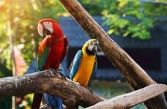 Bunter Macawvogel Lizenzfreie Stockbilder