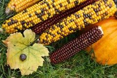 Bunter Mais stockbild