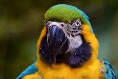 Bunter Papagei Lizenzfreie Stockfotos