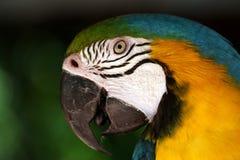 Bunter Papagei Stockbild