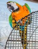 Bunter Papagei auf einem Käfig Stockbilder