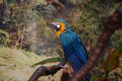 Bunter Papagei, der auf einer Niederlassung sitzt Stockfoto