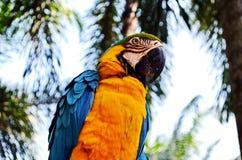 Bunter Papagei gibt einen Vortrag in Thailand Lizenzfreies Stockfoto