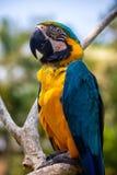 Bunter Papagei im Bali-Vogelpark Stockfoto