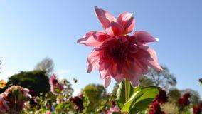 Bunter Park mit Blumen Stockbilder
