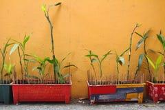 Bunter Potenziometer und gelbe Wand stockfotografie