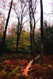 Bunter regnerischer Falltag im Wald, in im Hinterland NY stockfotografie