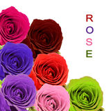 Bunter Rosenblumenstrauß mit Beispieltext auf weißem Hintergrund Lizenzfreies Stockfoto