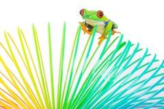 Bunter roter gemusterter Baumfrosch auf einem Spielzeug Stockbild