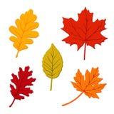 Bunter Satz Herbstlaub, lokalisierter Kranke Stockbilder
