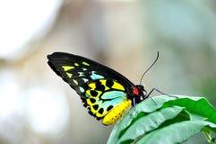 Bunter Schmetterling Stockbilder