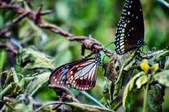 bunter Schmetterling 2 Stockbilder