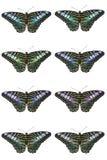 Bunter Schmetterling auf weißem Hintergrund Lizenzfreie Stockfotografie