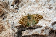Bunter Schmetterling gelegt auf Blume lizenzfreie stockbilder