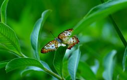 Bunter Schmetterling III Stockbilder
