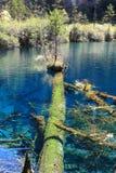 Bunter See in Nationalpark Jiuzhaigou Stockbilder