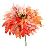 Bunter Sommerhintergrund mit Blumen Stockbild