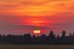 Bunter Sonnenaufgang auf dem Reisgebiet mit Arengapalmebaum Lizenzfreie Stockfotografie