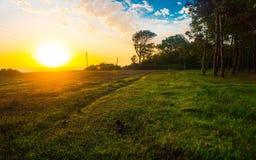 Bunter Sonnenaufgang auf Franse des Waldes Lizenzfreie Stockfotografie