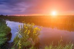 Bunter Sonnenuntergang über dem kleinen Fluss Schöne Blumen durch das r Stockbild