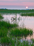 Bunter Sonnenuntergang über Sumpfland Lizenzfreies Stockfoto