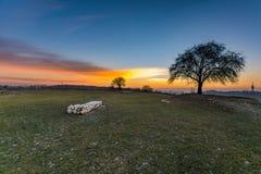 Bunter Sonnenuntergang auf dem Hügel hinter dem Baum stockfoto