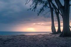 Bunter Sonnenuntergang mit Baum stockfotografie