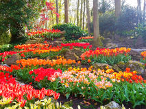 Bunter Tulpe Rockery in Keukenhof Lizenzfreie Stockfotos