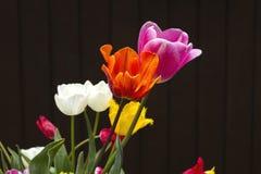 Bunter Tulpenblumenstrauß stockfotos