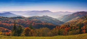 Bunter und heller Herbstwald Stockfotos