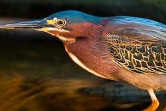 Bunter Vogel in der river's Küste Lizenzfreies Stockbild